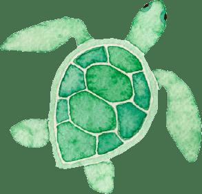 turtle-350-2
